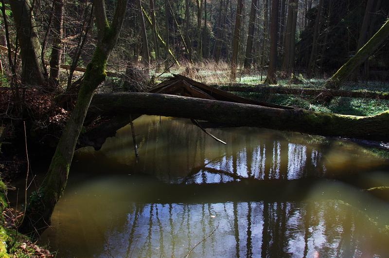 Robečský potok  - Liběna Stiebitzová